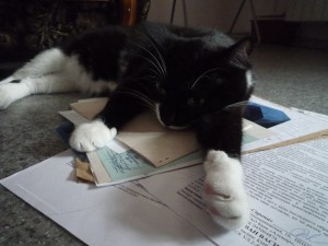Котейка как бы намекает: хозяин, я грущу, не уезжай!